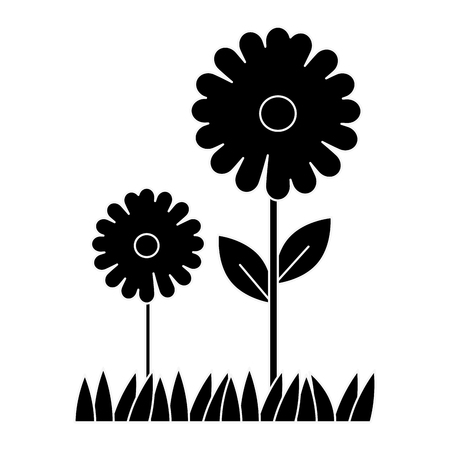 beautiful sunflower cultivated icon vector illustration design