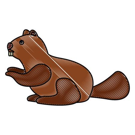 beaver rodent mammal wildlife fauna vector illustration drawing color