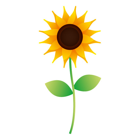 cute sunflower stem leaves nature image vector illustration 矢量图像