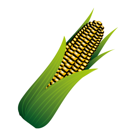 corn on the cob sweet with leaves vector illustration