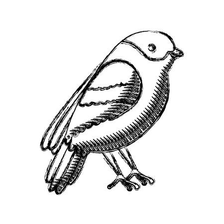 bird animal feathers wildlife vintage style vector illustration