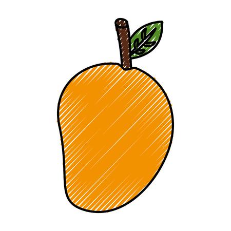 fresh mango fruit healthy food vector illustration design