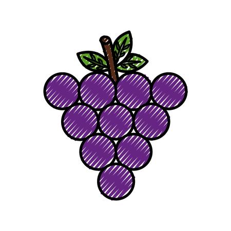 fresh grapes fruit healthy food vector illustration design Ilustração