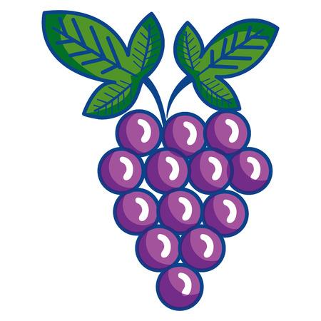 grapes fresh fruit icon vector illustration design Illustration