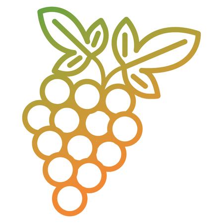grapes fresh fruit icon vector illustration design Çizim