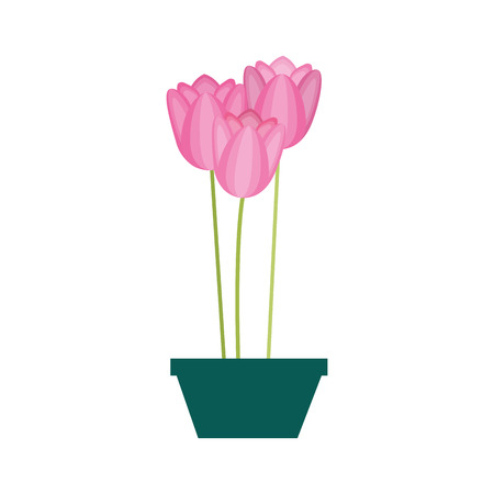 flowers tulips in a pot decorative vector illustration design
