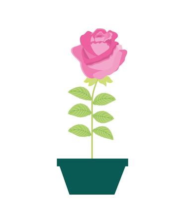 flower rose in a pot decorative vector illustration design