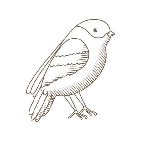 cute bird with beautiful plumage vector illustration design