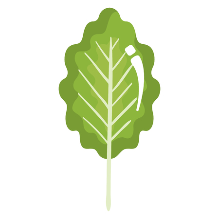 leaf plant healthy food vector illustration design Stock Vector - 98595865