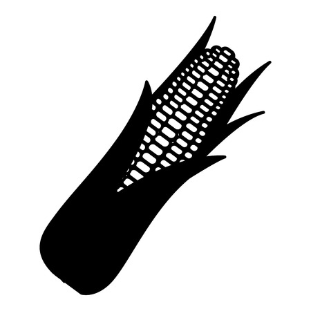 cob corn grain leaves agriculture organic vector illustration