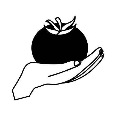 hand holding fresh ripe tomato tasty vector illustration Illustration
