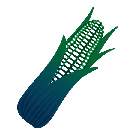 fresh corn vegetable icon vector illustration design