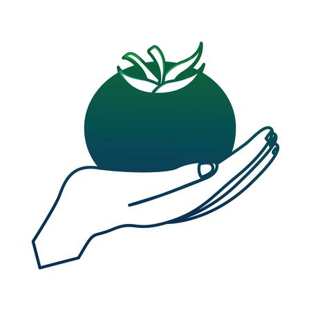 Main levée tomate fraîche illustration vectorielle conception Banque d'images - 99013562