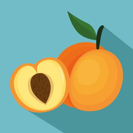 Fresh melon healthy food vector illustration design
