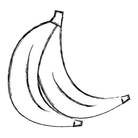 fresh bananas cluster isolated icon vector illustration design