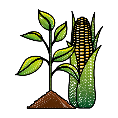 Plant corn ecology energy biofuel vector illustration drawing