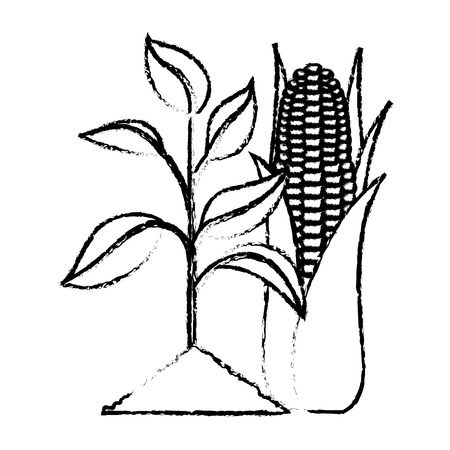 Plant with corn vector illustration sketch