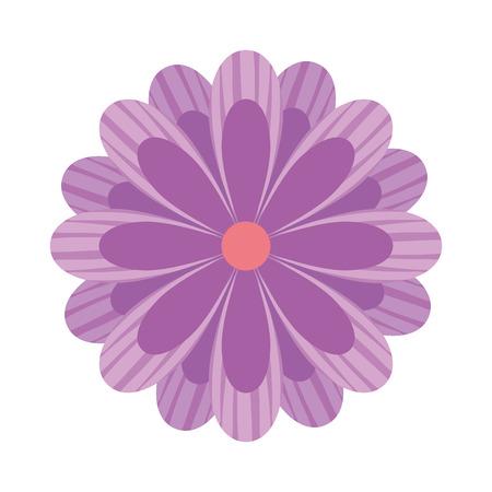 delicate flower nature bloom image vector illustration