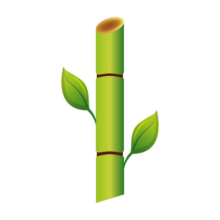 Sugar cane plant icon illustration design