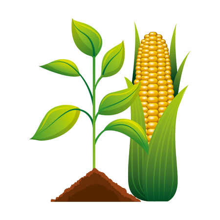 Cultivated plant with corn ecology icon  illustration design