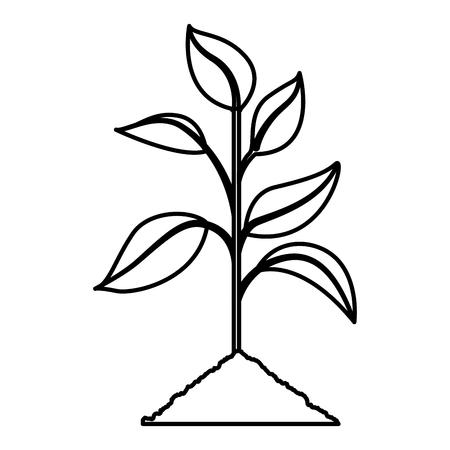 Cultivated plant icon vector illustration design
