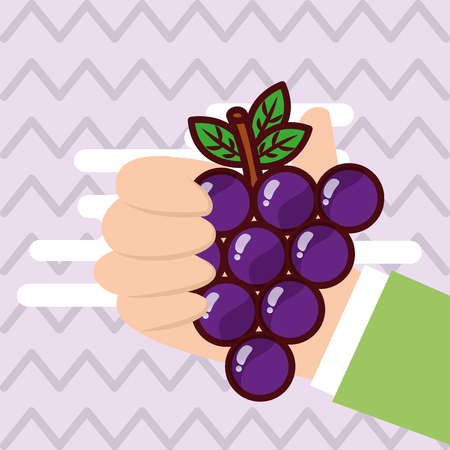 Hand holding grapes fresh colored background vector illustration