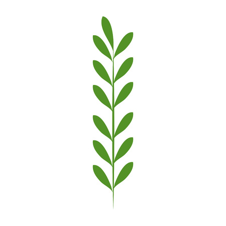 leaf of marine plant vector illustration design