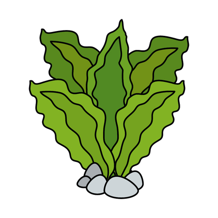 Aquarium decorative seaweed icon vector illustration design. Reklamní fotografie - 99888706