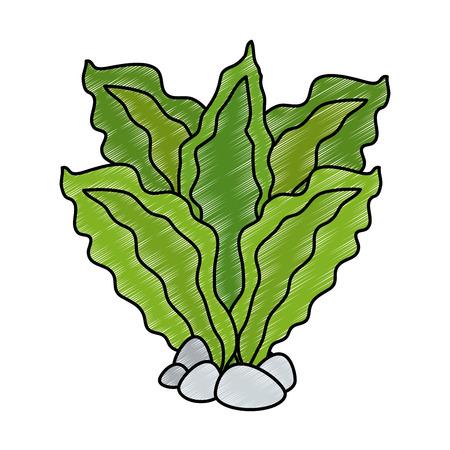 Aquarium decorative seaweed icon vector illustration design Çizim