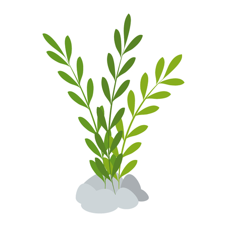 Aquarium decorative seaweed icon vector illustration design. Reklamní fotografie - 100022705
