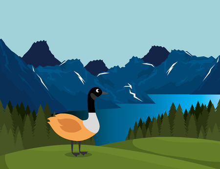canadian landscape with duck scene vector illustration design Illustration