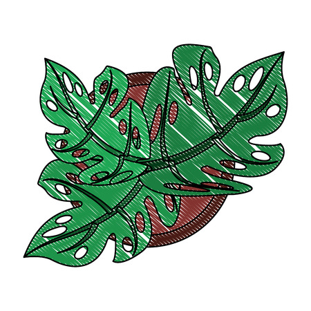 aerial view of house plant in pot vector illustration design