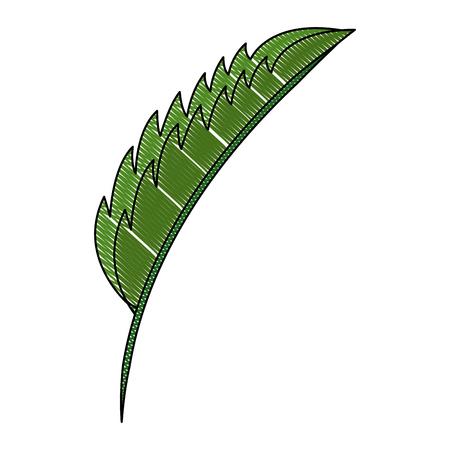 green leaf palm tropical nature image vector illustration Archivio Fotografico - 101407018