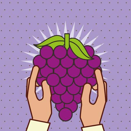 hand holding fresh fruit bunch grapes vector illustration