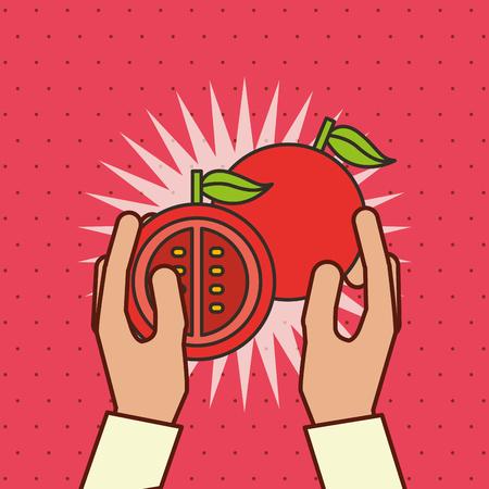 hand holding fresh vegetable tomato vector illustration Illustration