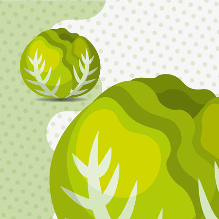 fresh vegetable lettuce on dots background vector illustration