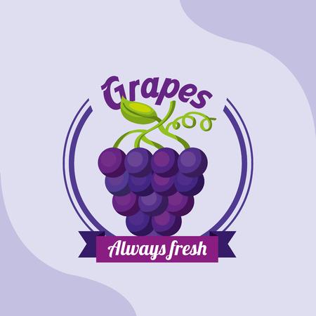 fruit bunch grapes always fresh emblem vector illustration