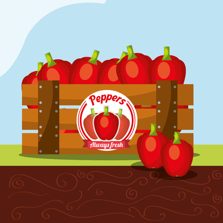 peppers vegetable always fresh in wood basket vector illustration Çizim