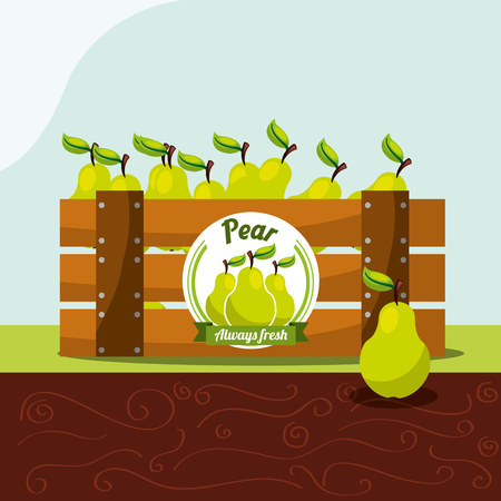 pear fruit always fresh in wood basket vector illustration Ilustração