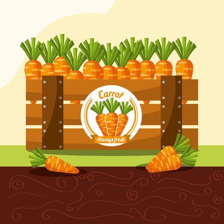carrot vegetable always fresh in wood basket vector illustration