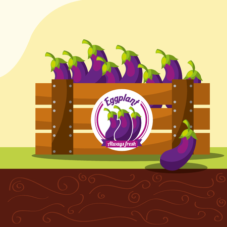 eggplant vegetable always fresh in wood basket vector illustration Çizim