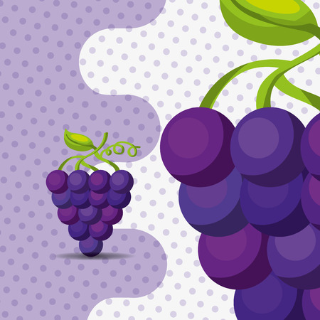 fresh fruit natural bunch grapes on dots background vector illustration