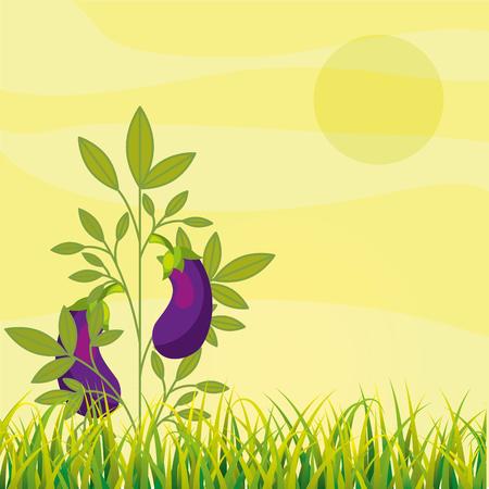 agriculture plantation vegetable eggplant image vector illustration