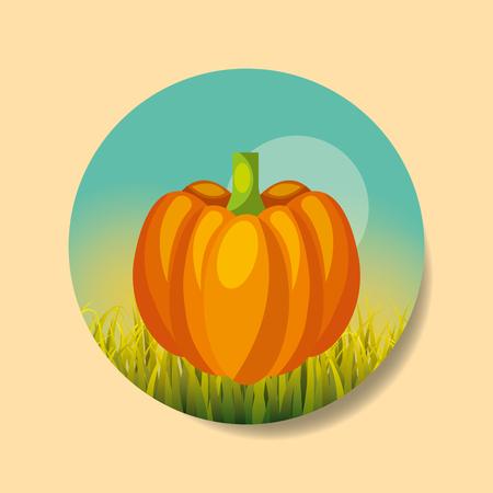 plantation vegetable harvesting pumpkin image vector illustration