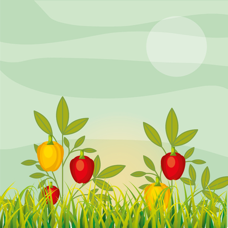 agriculture plantation vegetable yellow red pepper vector illustration Ilustração
