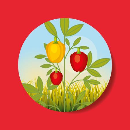 plantation vegetable harvesting yellow red pepper vector illustration Banque d'images - 101810916