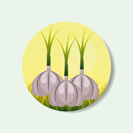plantation vegetable harvesting garlic image vector illustration Illustration