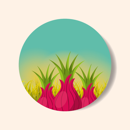 plantation vegetable harvesting onion image vector illustration Illustration