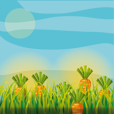 agriculture plantation vegetable carrot image vector illustration