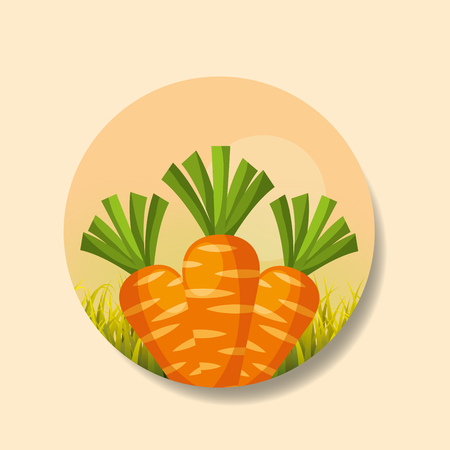 plantation vegetable harvesting carrot image vector illustration